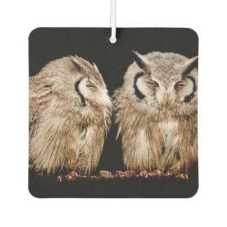 Owlets jovenes en fondo oscuro