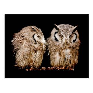 Owlets jovenes en fondo oscuro tarjeta postal
