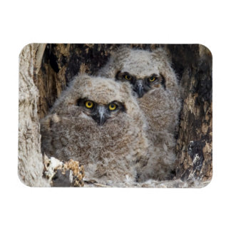 Owlets Magnet