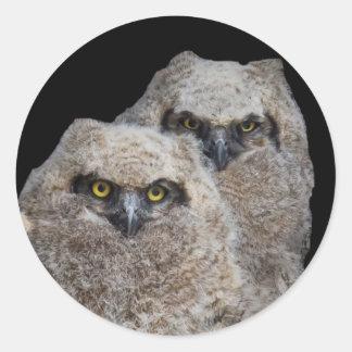 Owlets Pegatina Redonda