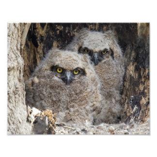 Owlets Photo Print