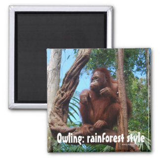 Owling Orangutan in the Rainforest 2 Inch Square Magnet