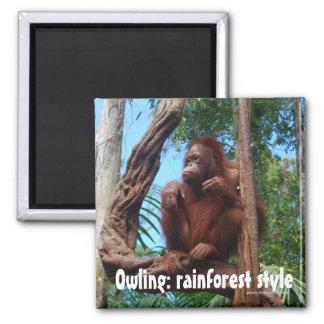Owling Orangutan in the Rainforest 2 Inch Square Magnet