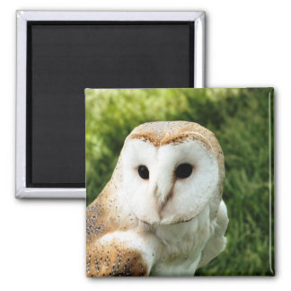 OWLS 2 INCH SQUARE MAGNET