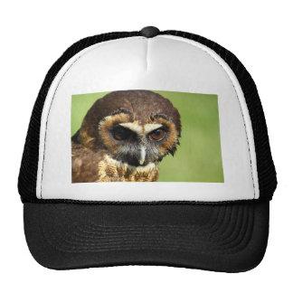Owls Animal Birds Nature Park Tree Harmony Destiny Trucker Hat