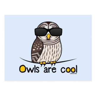 Owls are cool postcard