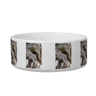 OWLS BOWL