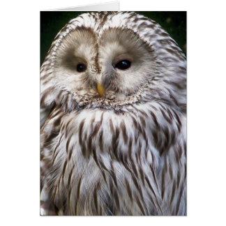 OWLS CARDS
