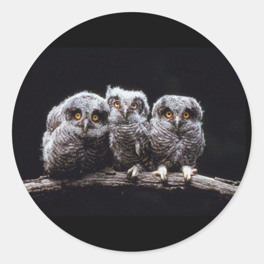 Owls Classic Round Sticker