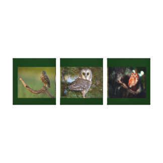 Owls Collage Birds Three Panel Canvas Stretched Canvas Prints