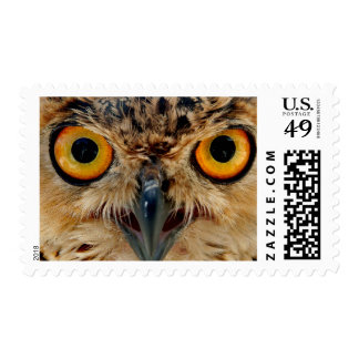 Owls Eyes Postage