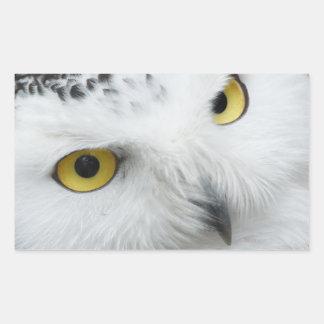 Owl's eyes rectangular sticker