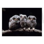 Owls Greeting Card
