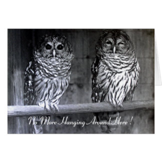 Owls Greeting Cards