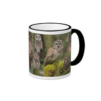 Owls in Old Growth Ringer Mug