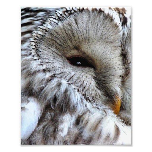 OWLS PHOTO PRINT