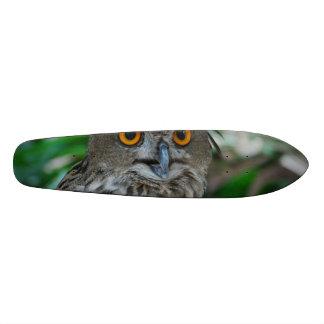 Owls Skate Boards