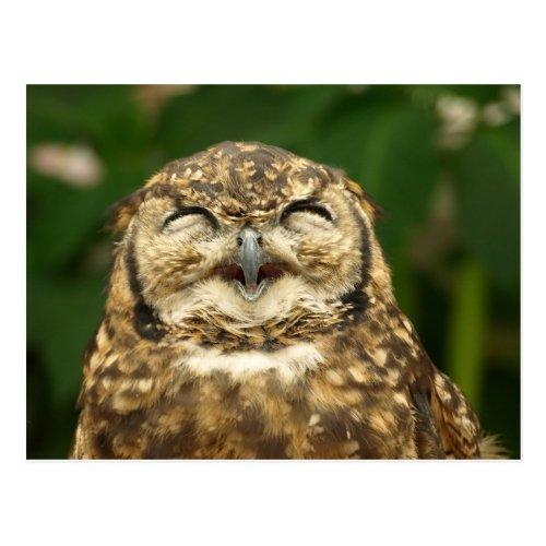 owls smile  postcard