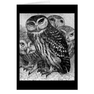 Owls, vintage engraving greeting card