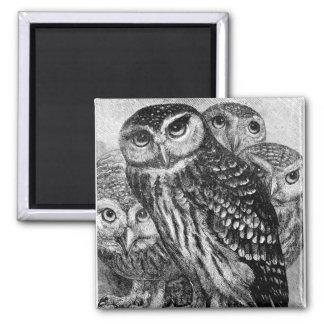 Owls, vintage engraving magnet