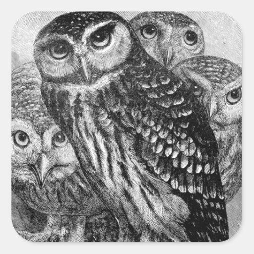 Owls, vintage engraving square sticker