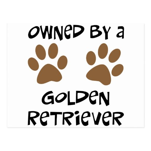 Owned By A Golden Retriever Postcard