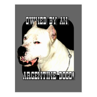 Owned by an Argentine Dogo Postcard