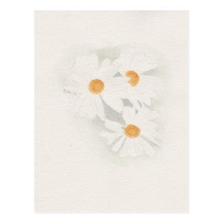 Ox eye daisy postcard