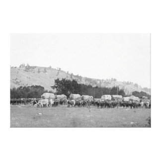Ox Trains between Sturgis and Deadwood Photograp Canvas Print