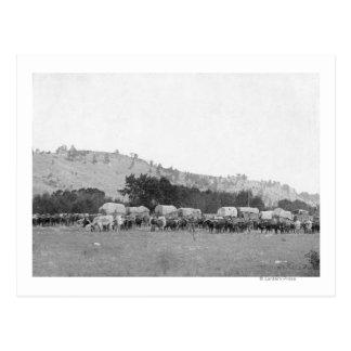 Ox Trains between Sturgis and Deadwood Photograp Postcard