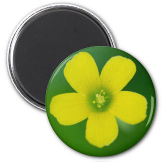 oxalis 2 inch round magnet