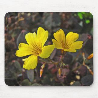 Oxalis Amarillo-Floreció el Houseplant Mousepads