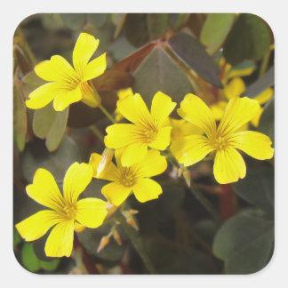 Oxalis Amarillo-Floreció el Houseplant Pegatina Cuadrada