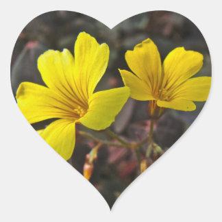 Oxalis Amarillo-Floreció el Houseplant Pegatina En Forma De Corazón