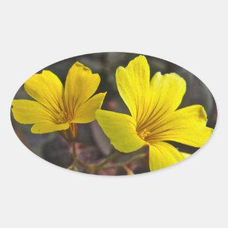 Oxalis Amarillo-Floreció el Houseplant Pegatina Ovalada