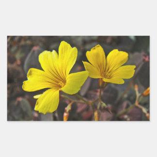 Oxalis Amarillo-Floreció el Houseplant Pegatina Rectangular