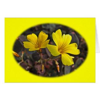Oxalis Amarillo-Floreció el Houseplant Tarjeta De Felicitación
