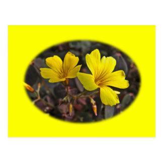 Oxalis Amarillo-Floreció el Houseplant Tarjeta Postal