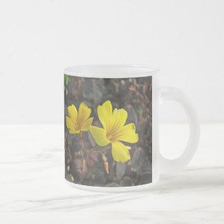 Oxalis Amarillo-Floreció el Houseplant Taza Cristal Mate