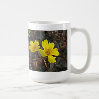 Oxalis Amarillo-Floreció el Houseplant Taza Básica Blanca