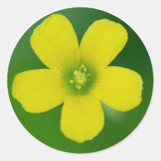 oxalis classic round sticker