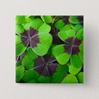 Oxalis Leaves - Red and Green Pinback Button