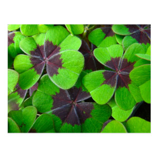 Oxalis Leaves - Red and Green Postcard