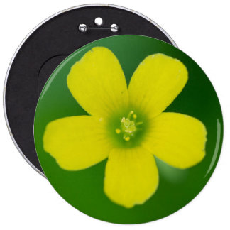 oxalis pinback button
