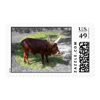 Oxen part color part black and white postage