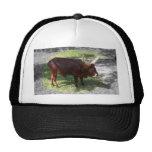 Oxen part color part black and white trucker hats