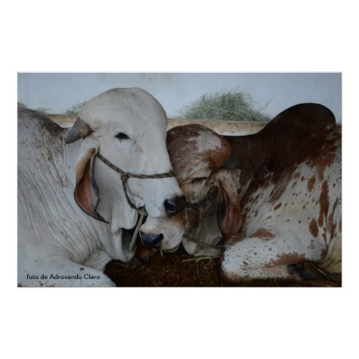 Oxen Poster