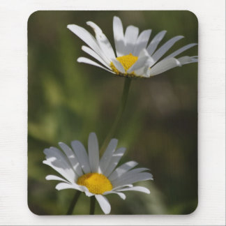Oxeye Daisies Mouse Pad