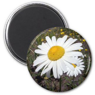 Oxeye Daisy 1 Magnet