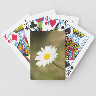 Oxeye Daisy Bicycle Playing Cards
